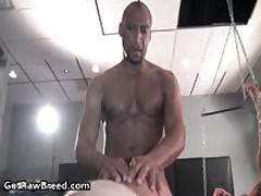 Kamrun, Chis Khol, Buster Sly And Igor Lucas In Super Exciting Homosexual Threesome 17 By GetRawBreed
